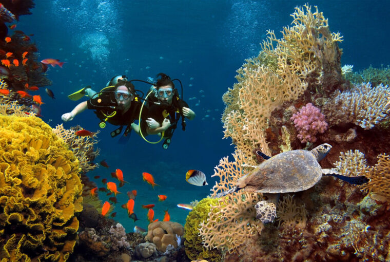 Couple dives among corals, fish and turtle in the ocean