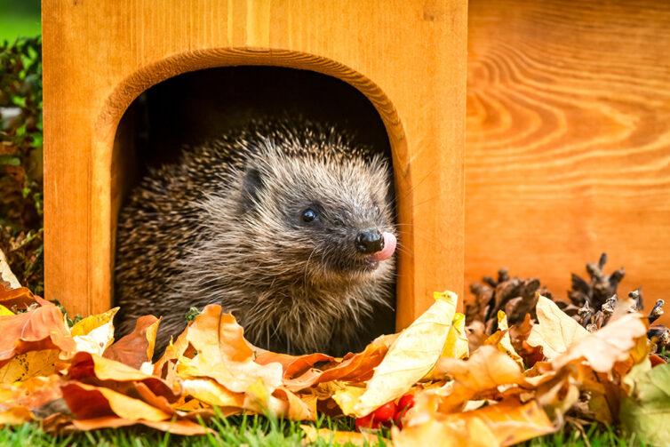 Hedgehog shelter