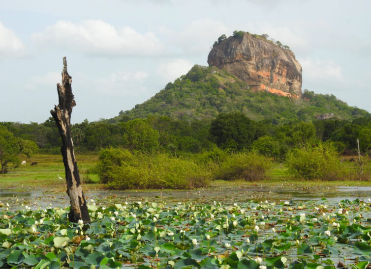 The incredible landscape of Sigiriya - Photo By Andrew Tisley (https://andrewtilsley.wixsite.com/artwork)
