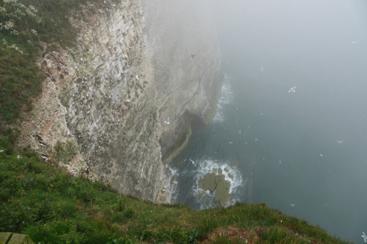 Bempton Cliffs East Yorkshire - Image By Andrew Tilsley Photo By Andrew Tisley (https://andrewtilsley.wixsite.com/artwork/photography)