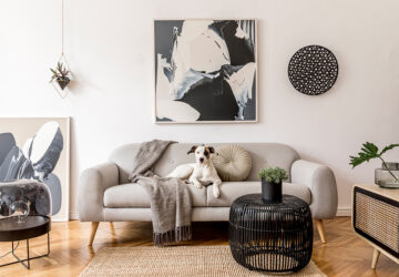 Living room with plants and a black and white dog sitting on a cosy grey sofa