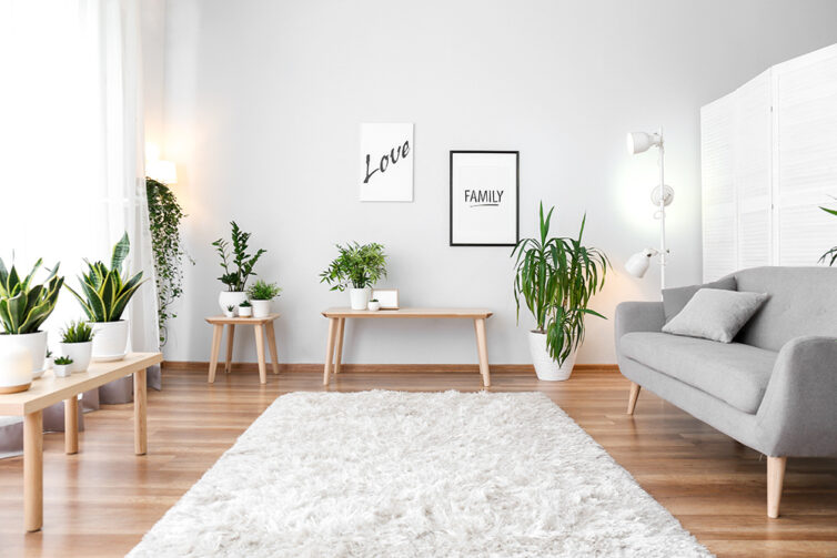 Living room with laminate covered flooring, a soft cream rug, plants and a grey sofa